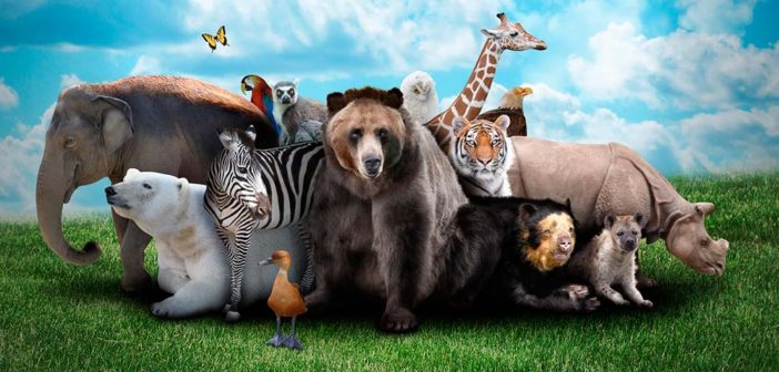 Обновленный детский зоопарк откроется в Москве весной 2018 года